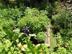 susan meeker-lowry's organic garden in maine basil horseradish and more