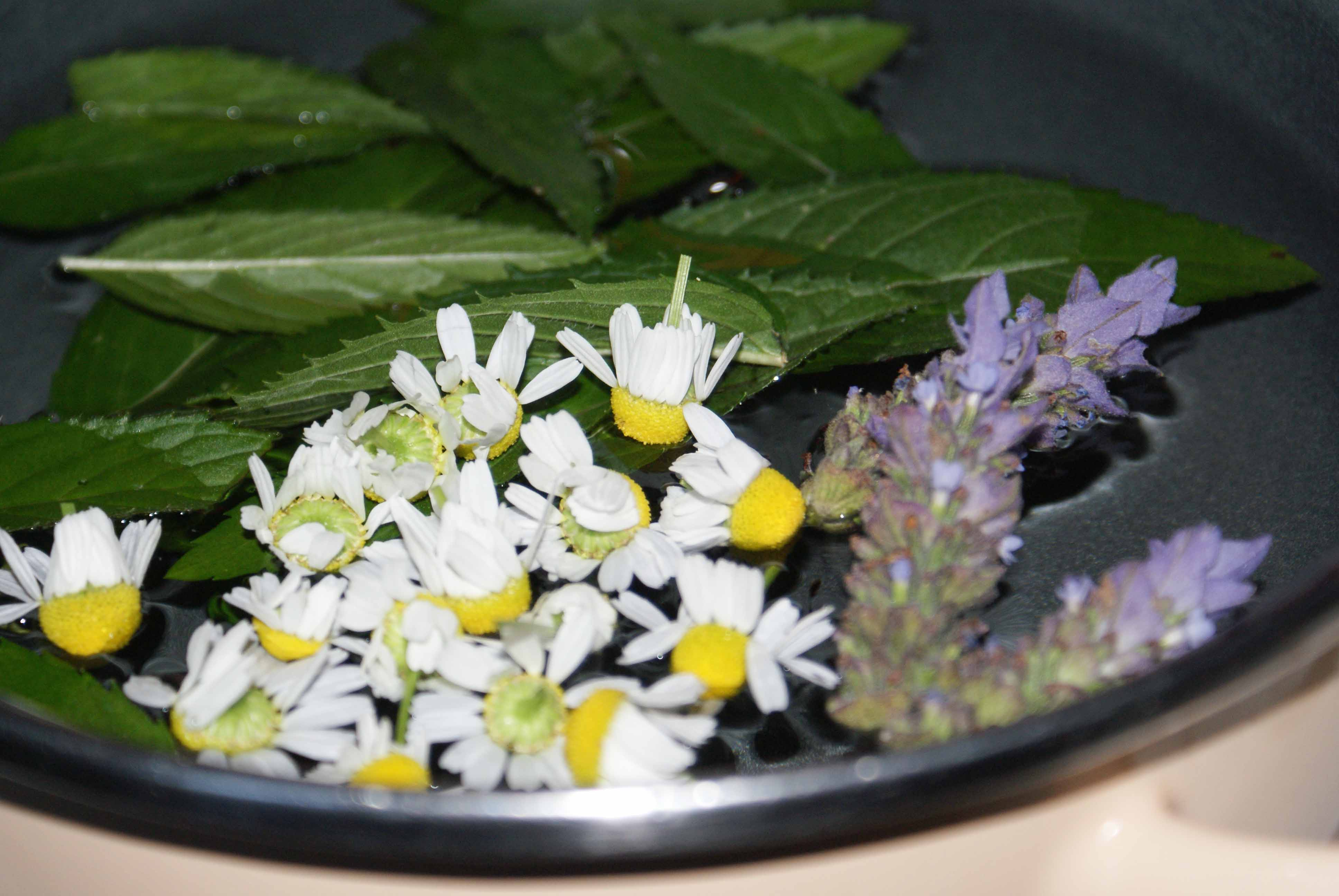 Chamomile, spearmint, & lavendar for herbal tea.
