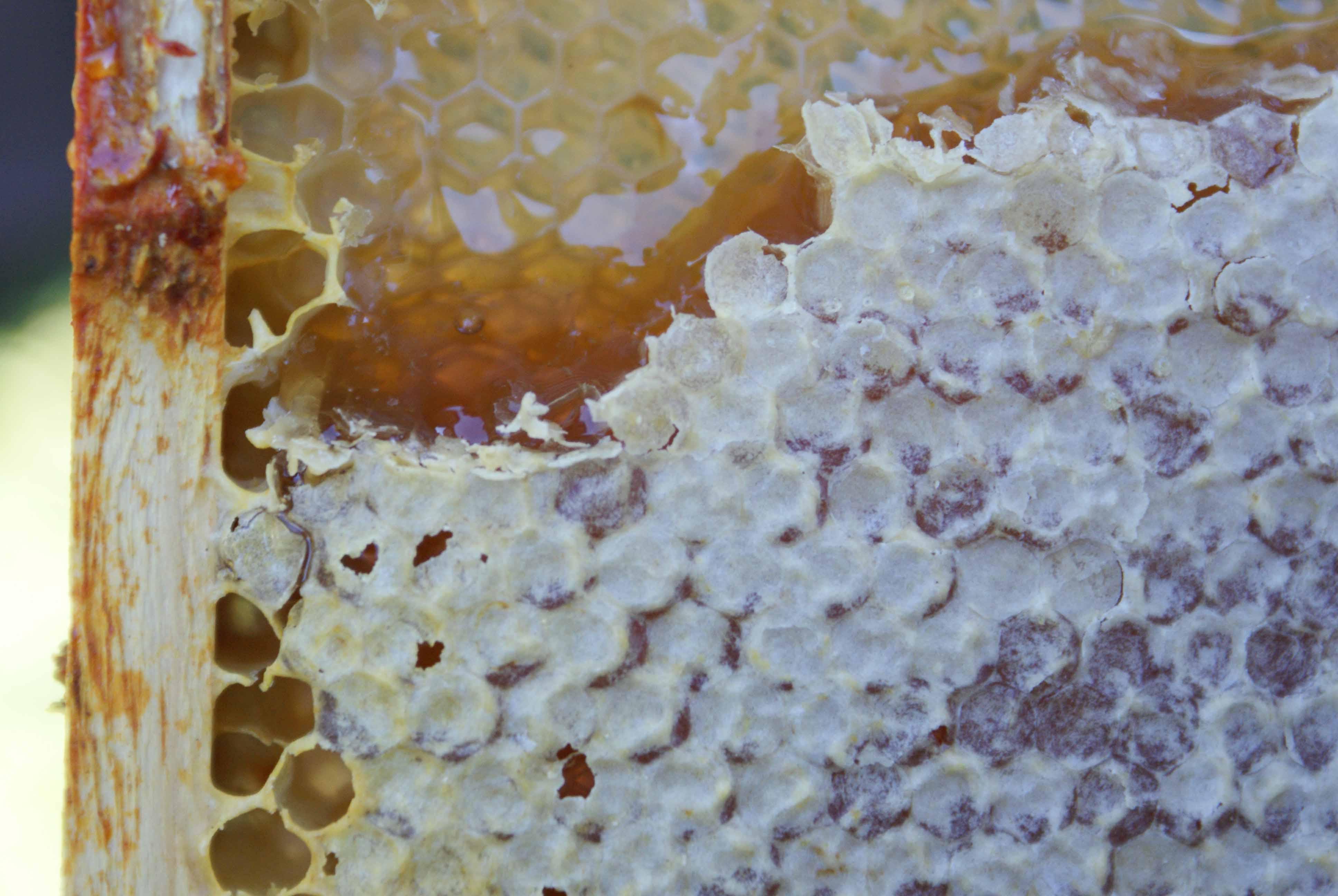 Honeycomb to Honey.
