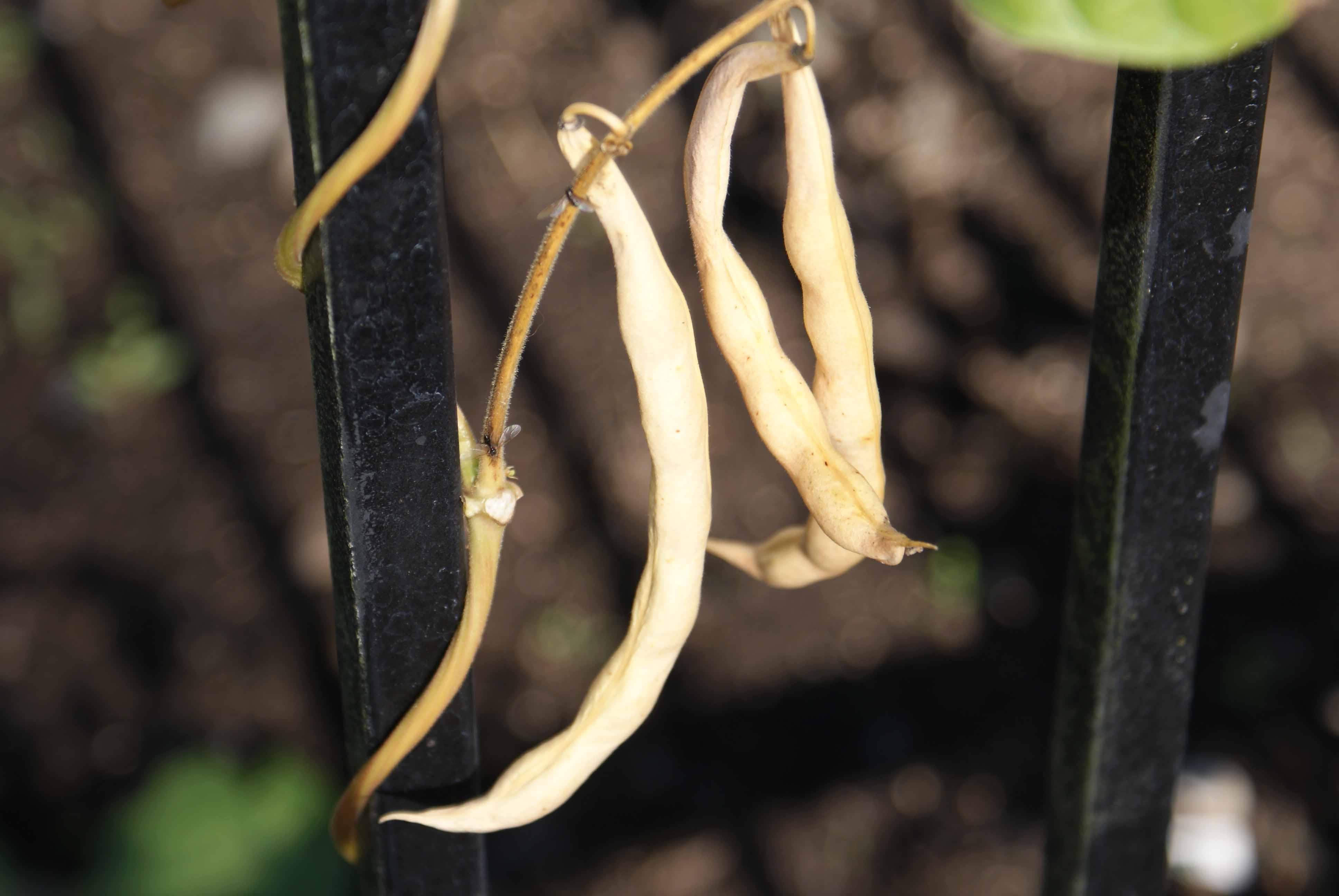 Saving seeds.